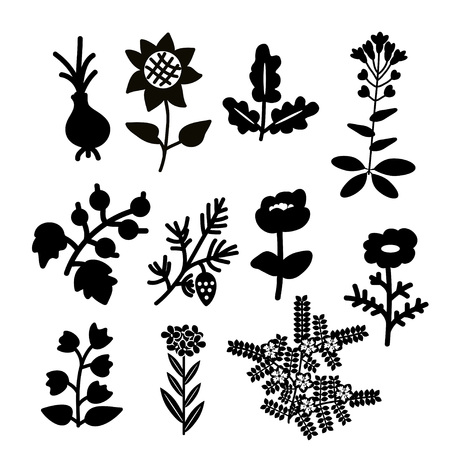 quercus: Deocorative black and white plants set