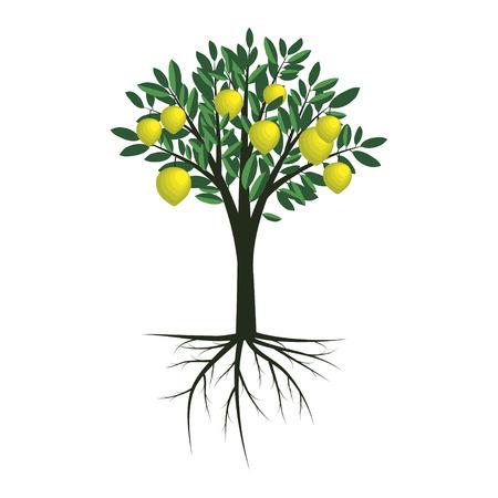 Simple vector lemon tree illustration Stock Illustratie
