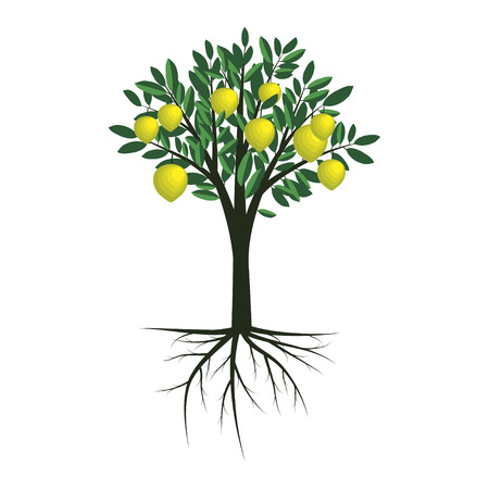 Simple vector lemon tree illustration Ilustrace