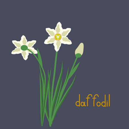 daffodil: Simple daffodil vector plant illustration