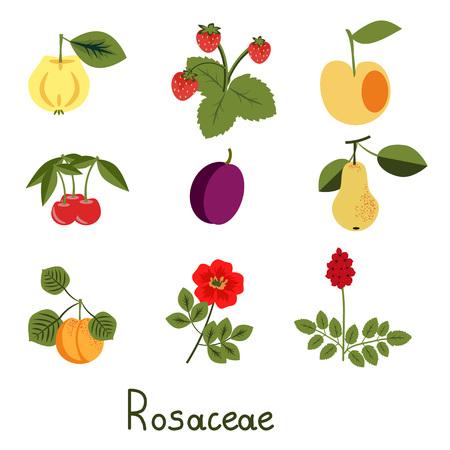 rosaceae: Set of rosaceae family plants