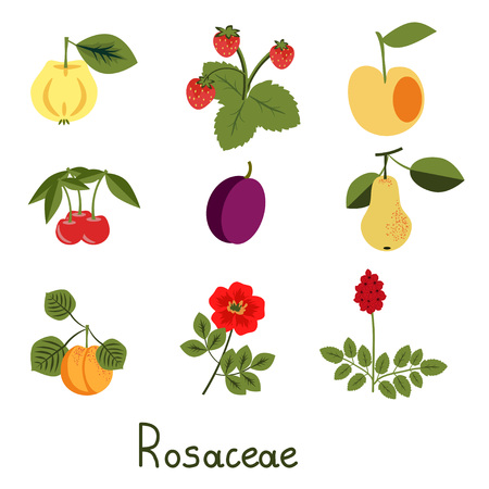 Set of rosaceae family plants