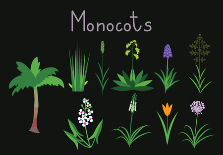 tulips in green grass: Exaples of monocots plants collection