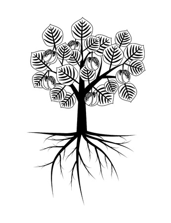 apricot: Apricot tree with roots illustration