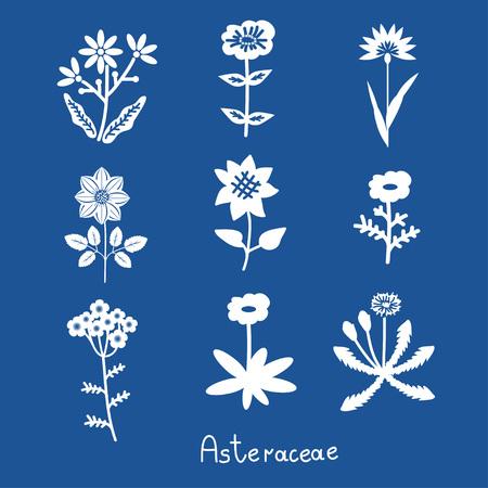 asteraceae: Asteraceae vector stylized flowers set