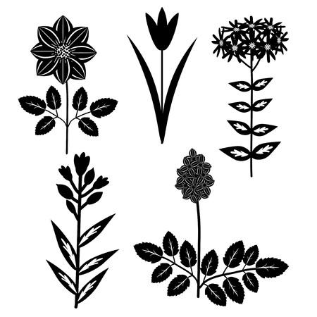 Decorative black and white flowers set Illustration