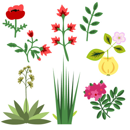 papaver: Set of various vector plants