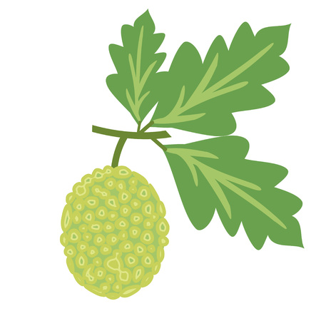 Simple breadfruit illustration with leaves