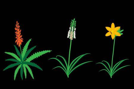botanica: Asphodelaceae plant family flowers examples