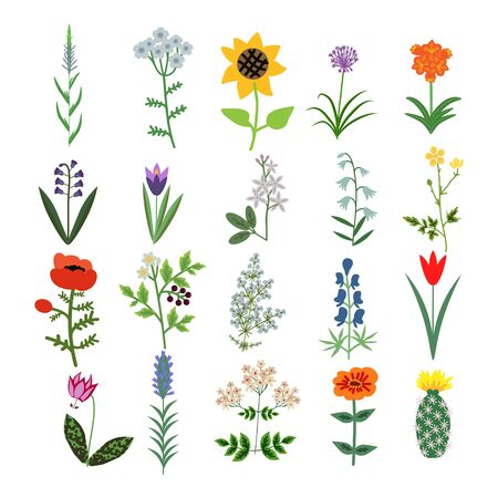Set of decorative vector plants Illustration