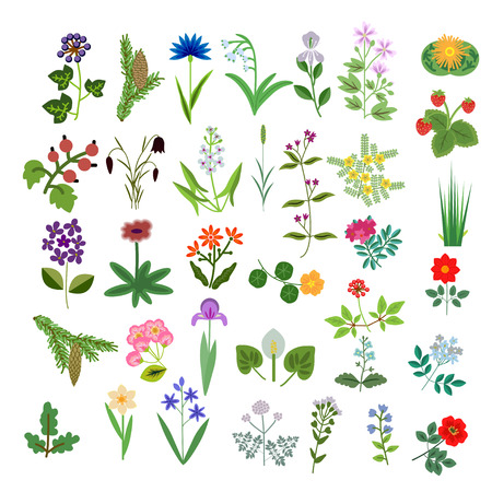 fragaria: Set of decorative vector plants Illustration