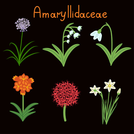buch: Amaryllidaceae plant family examples set
