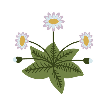 Decorative isolated vector daisy illustration