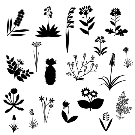 Black and white flowers vector set