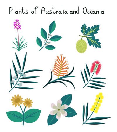 Plants of Australia and Oceania vector set Illustration