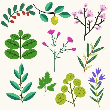 Vector wild and garden plants collection