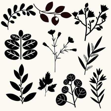 Decorative vector black and white plants