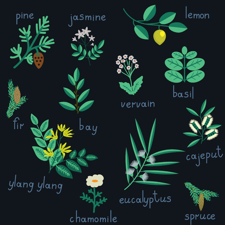 Set of essential oil plants
