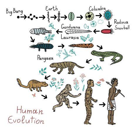 Human evolution timeline vector illustration Illustration