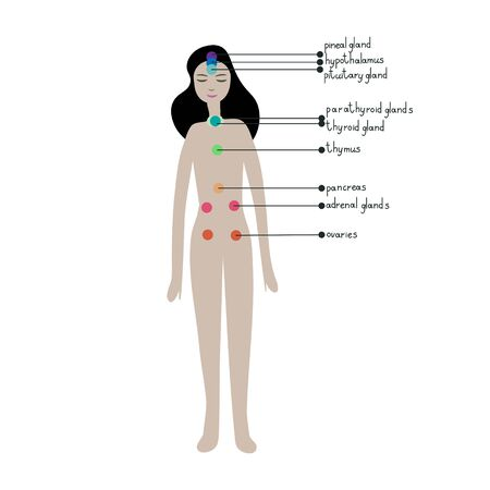 Endocrine system simple vector illustration