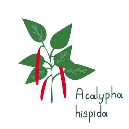 Acalypha vector isolated simple plant Illusztráció