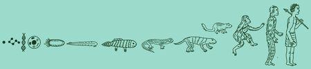 Human evolution vector drawn illustration