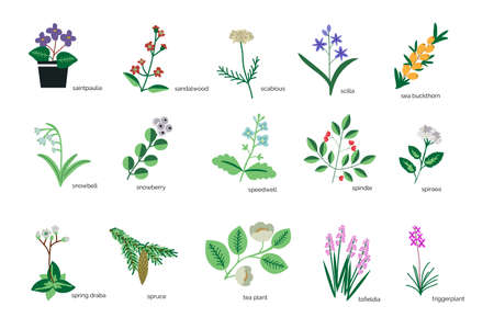 Isolated plants simple icons collection Иллюстрация
