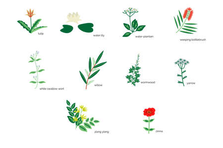 Isolated plants simple icons collection Illustration