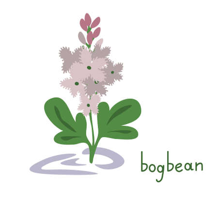 Bogbean isolated flower simple illustration