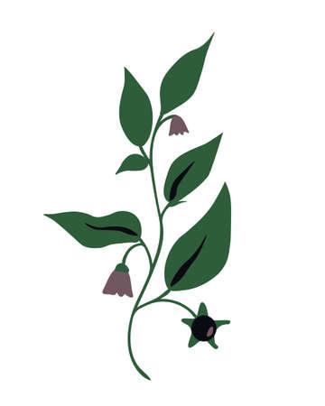 Atropa belladonna isolated vector plant