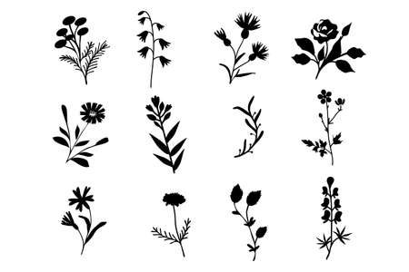Isolated black and white vector flowers set
