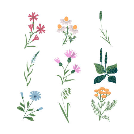 Isolated meadow vector flower set