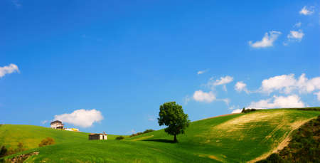 Bright summer landscape with green field and blue sky