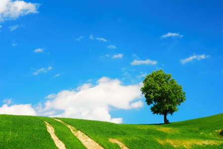 Summer landscape with green field, tree and blue sky