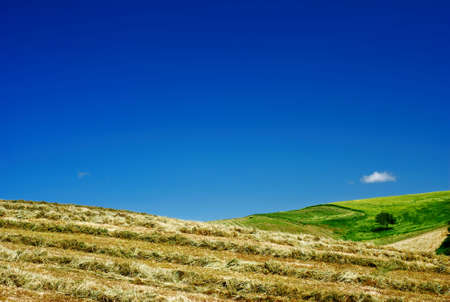 amazing stunning: Hay and blue sky in summer landscape