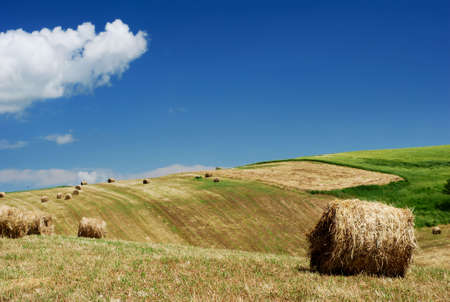 Hay bales in summer meadow under blue sky photo