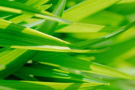 Plan de frescas hojas verdes de hierba  Foto de archivo - 3150501