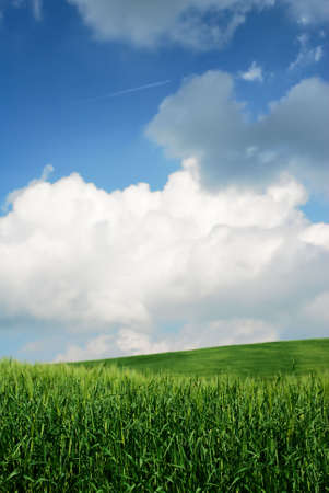 Green wheat fields with moody sky Stock Photo - 3234914