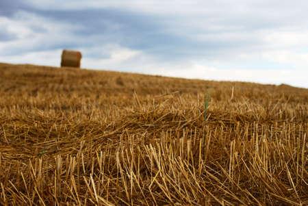 Straw bale in a field under moody sky