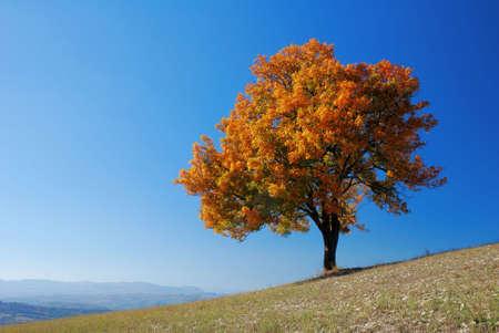 Helder gekleurde vallen boom met helder blauwe hemel