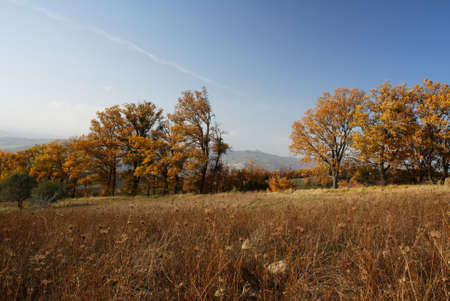Autumn view in dry grass field