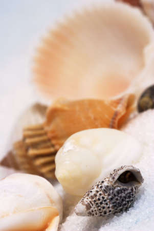 Shallow focus on group of little sea shells