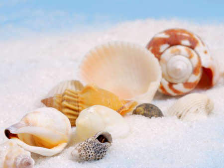 Shallow focus on diagonal line of little seashells and white sand photo