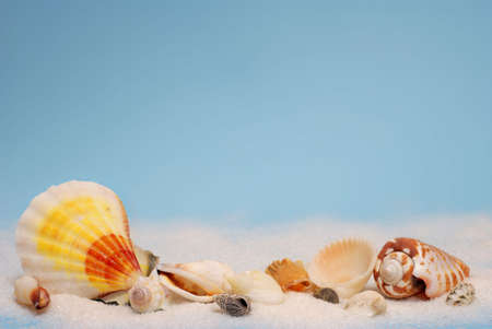 Group of colorful seashells in a line on white sand photo