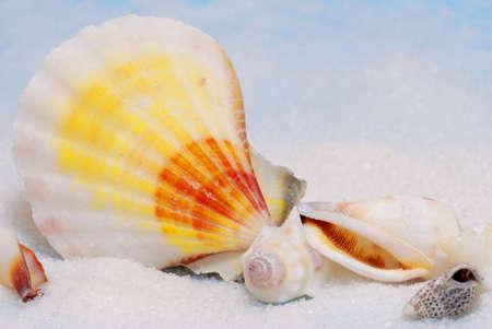 Closeup of colorful seashells on white sand photo