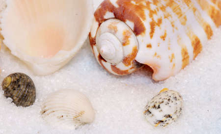 Group of colorful seashells on white sand and pale blue background photo