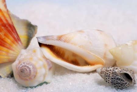 Closeup view of seashells and white sand photo