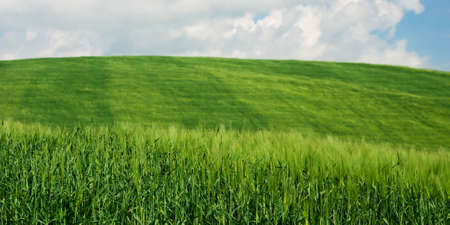 Fresh green wheat fields and blue sky Stock Photo - 4857318