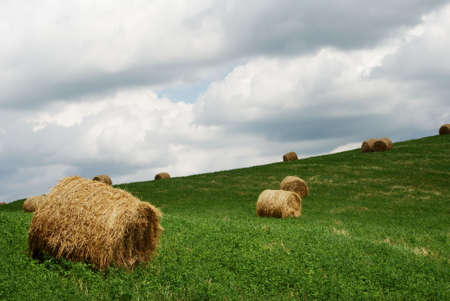Hay bales in a green field under grey stormy sky photo