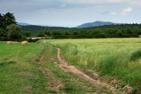Rural road and green meadow illuminated by the sun Stock Photo - 4886073